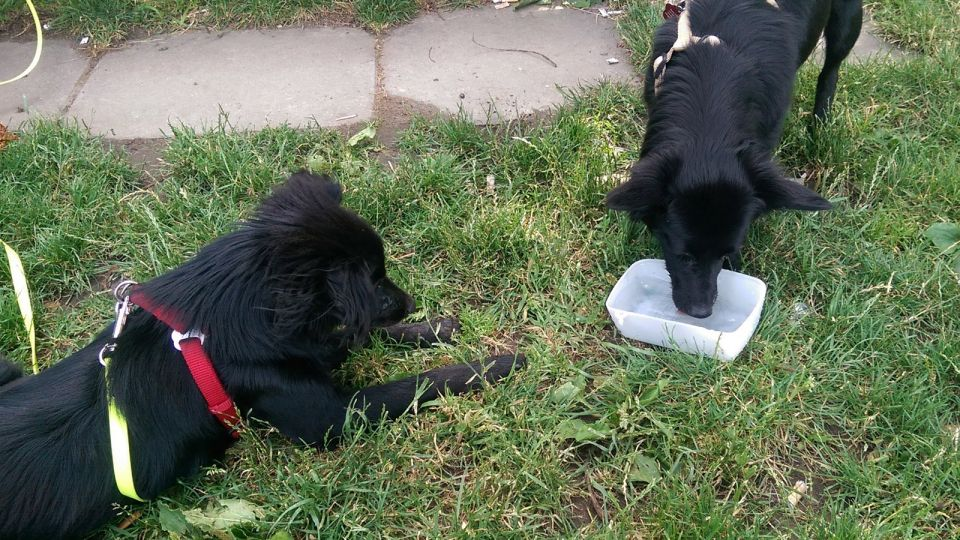 Dogs drinking Water in a Garden of a Restaurant © echonet.at / rv